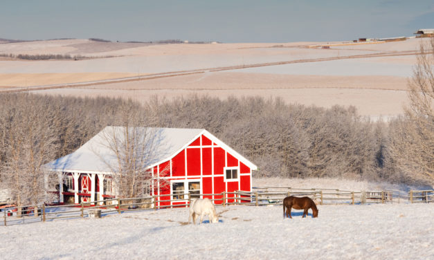 Tips for Managing Horse Barns During Winter