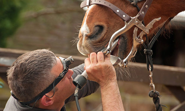 Complications Rare Following Equine Tooth Extractions