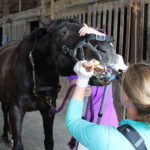Open Up and Say Zzz: Why Horse Dental Exams Require Sedation