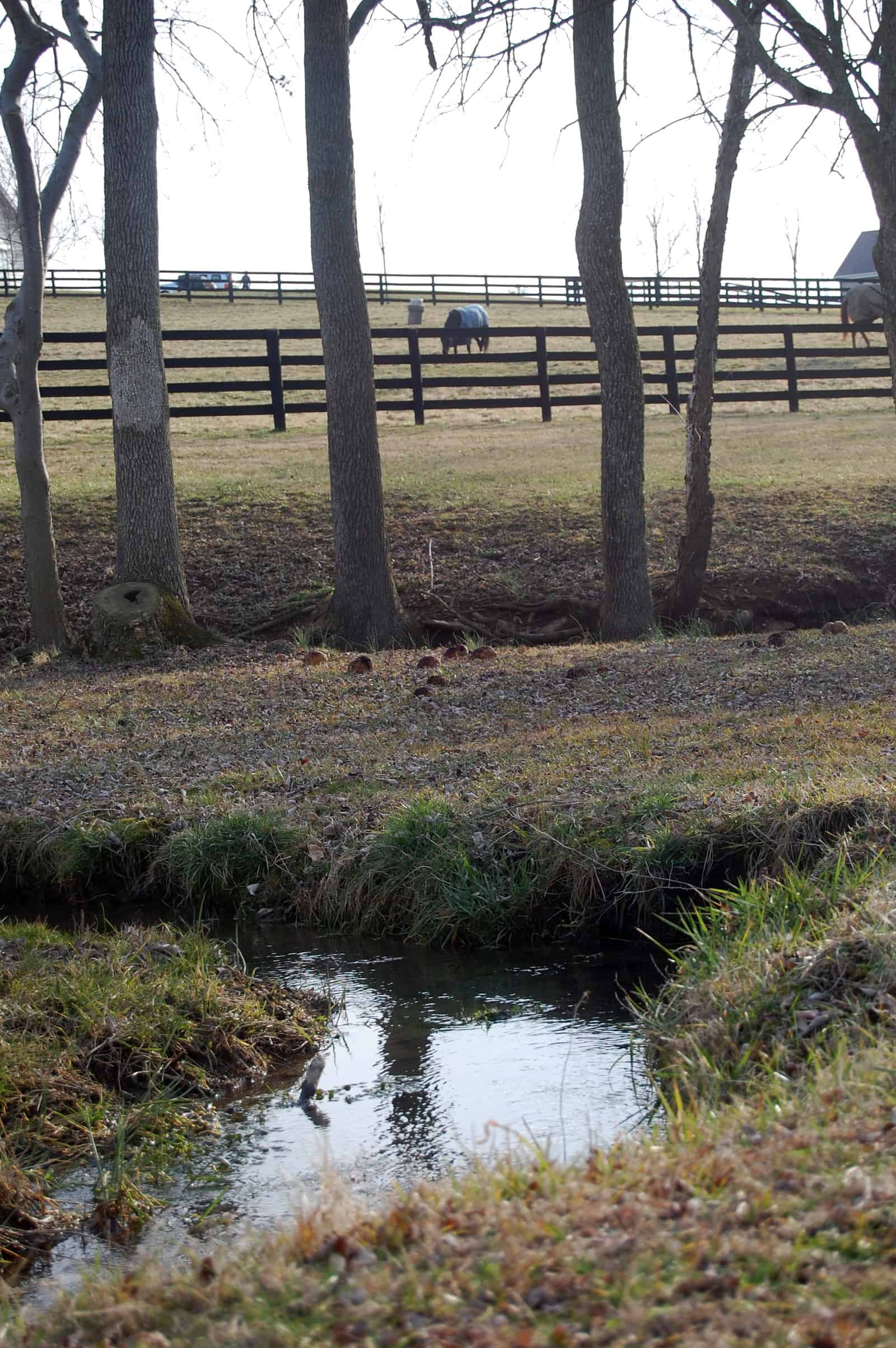 Preventing Water Pollution on Your Horse Farm