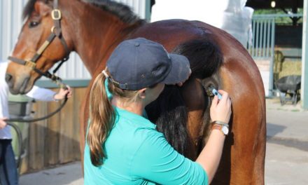 Equine Influenza at World Equestrian Center: More Cases Confirmed