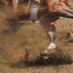 Stem Cell Therapy for Sport Horses