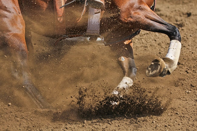 Stem Cell Therapy in Sport Horses