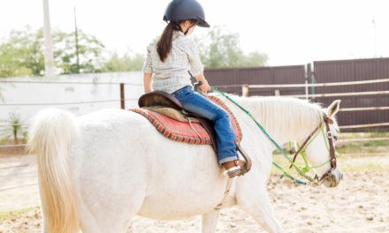 Keeping the Walk-Trot Horse Sound and Fit
