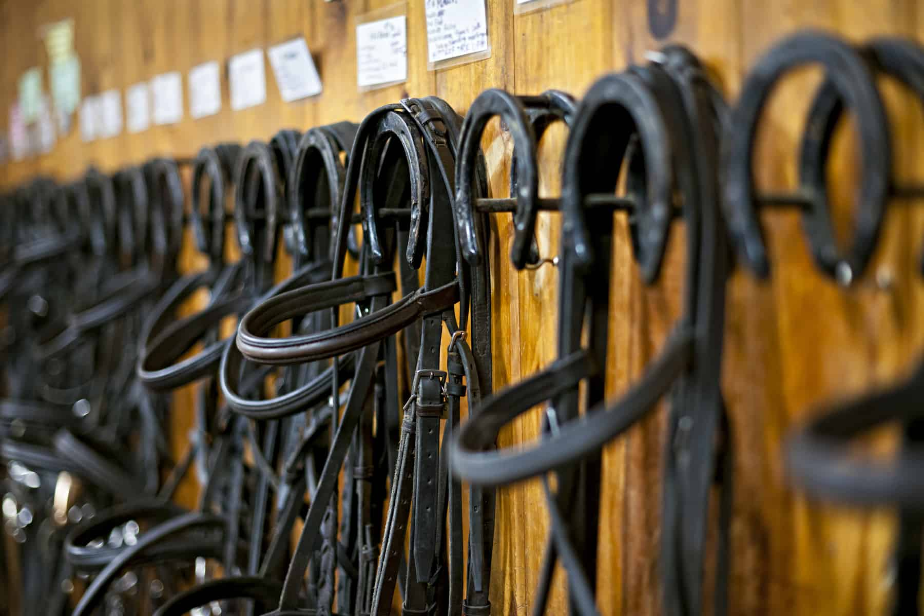 Marie Kondo vs  My Tack Room – The Horse