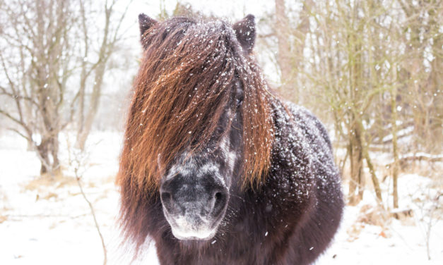 Senior Horse Health Problems: What to Watch For