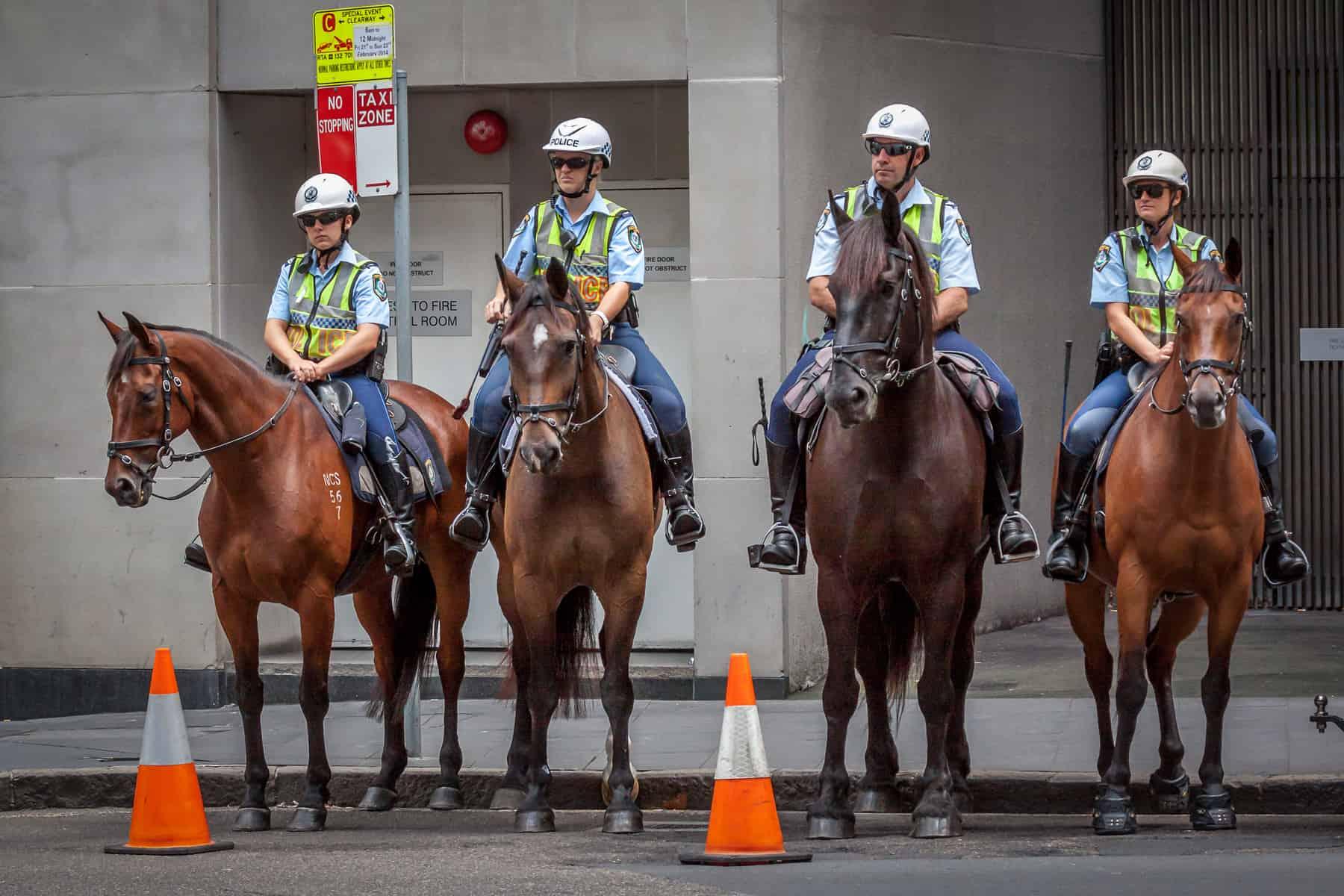 police horse welfare