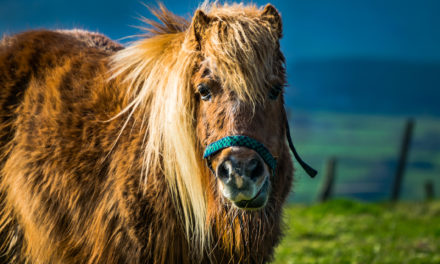 Testing for Endocrine Diseases in Middle-Aged and Older Horses