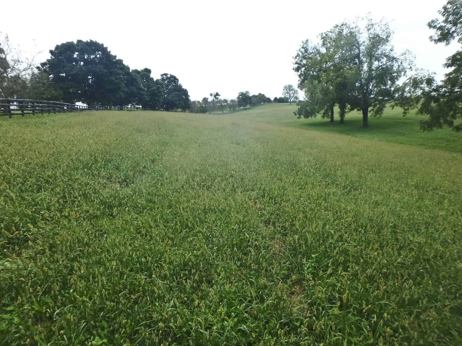 Controlling Gry Weeds In Horse Pastures The