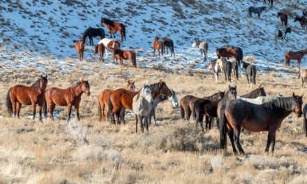 House Approves $11M for BLM Wild Horse Fertility Control