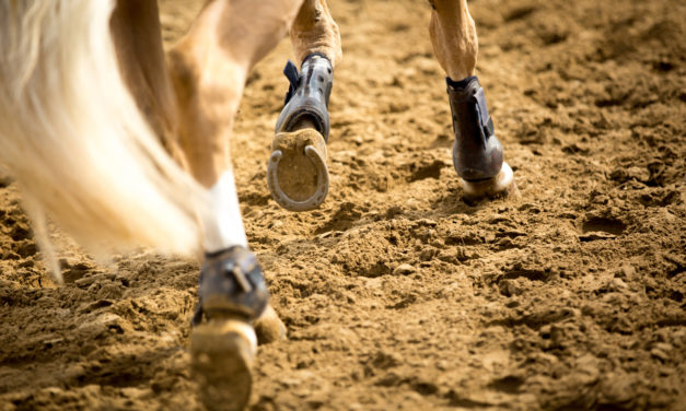 Shoeing Suggestions for Peak Equine Performance