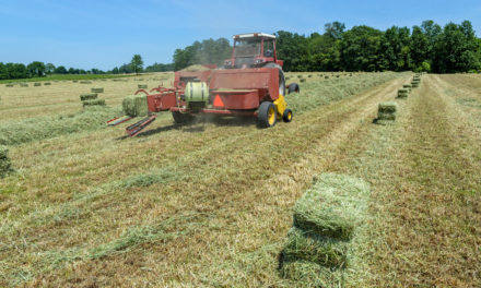 Is It Safe to Feed Moist Hay to Horses?