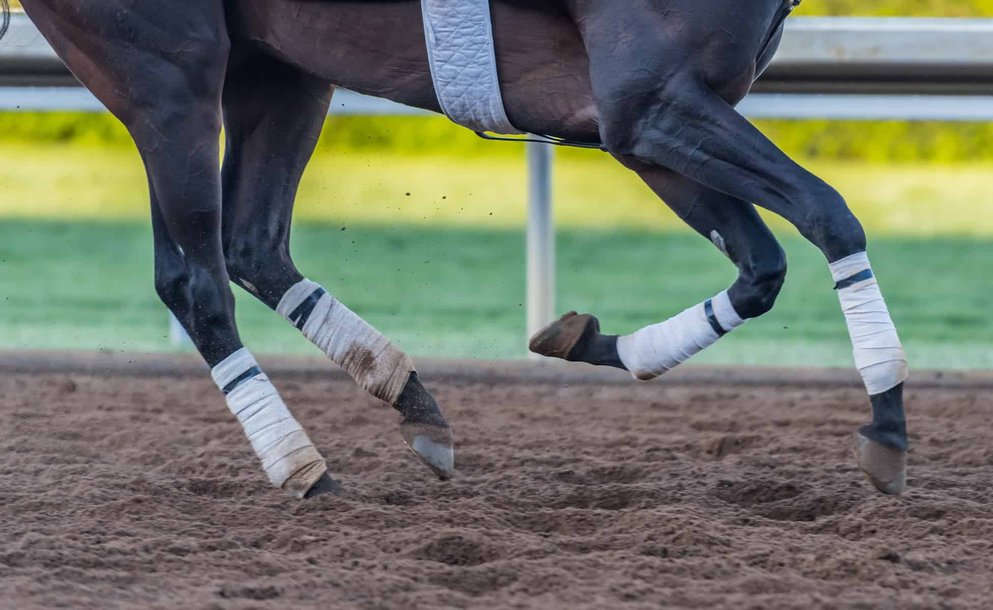 Racehorse Breakdowns: Training vs. Racing Track Surfaces
