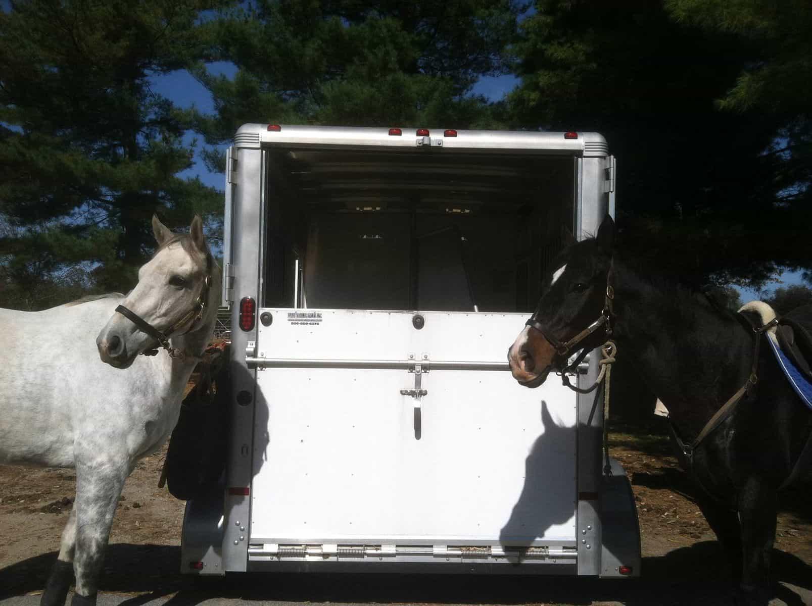 Cavalos de transporte