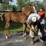 Small Feet, Big Responsibility: Hoof Care for Foals