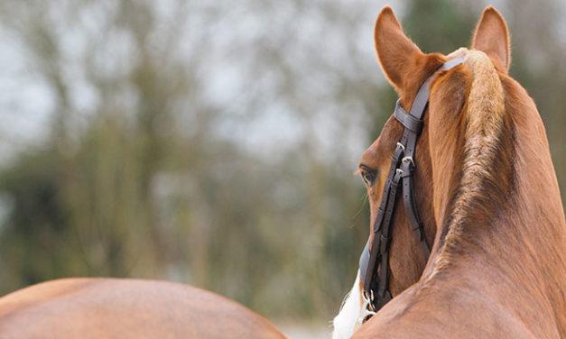 Horse Topline-Building Tips