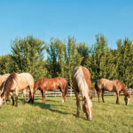 Risk and Reality: Horse Parasite Control and Anthelmintic Resistance
