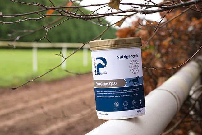 MicroActive CoQ10 Could Give Horses a Competitive Edge