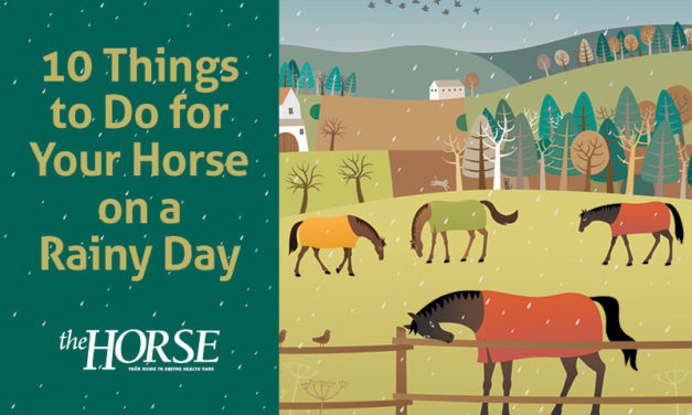 10 Things to Do for Your Horse on a Rainy Day