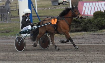 Harness Racing Success Linked to Intelligence Genes