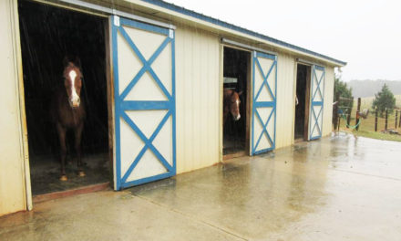 Preparing for Natural Disasters With Horses: Do's and Don'ts