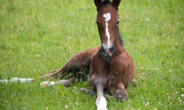 Genetic Testing Options for Horses