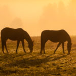 Pasture Grass Sugar Levels: When Are They Lowest?