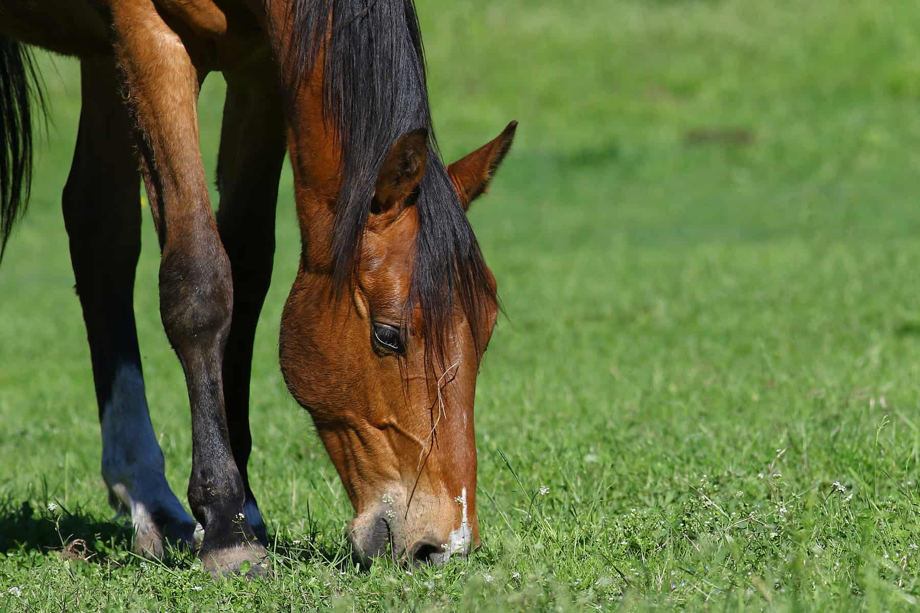 10 Equine Gut Health Resources on TheHorse.com – The Horse
