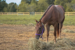 keeping horse diets consistent