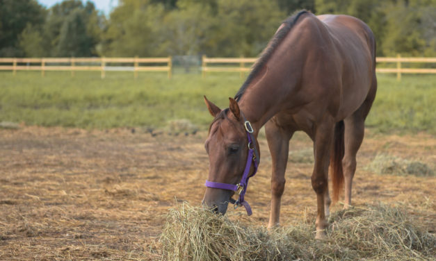 Leaky Gut Syndrome: Understanding the Connection To Many Equine Challenges