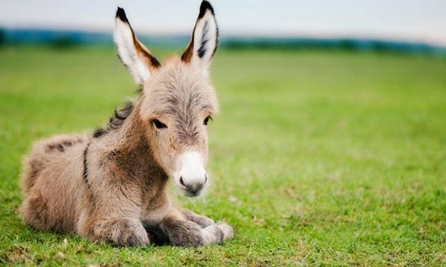 Celebrating International Donkey Week