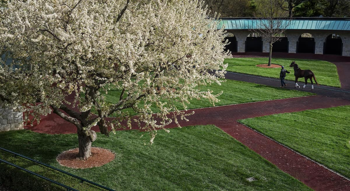 Keeneland Gifts $1 3 Million to UK for Equine Drug Research