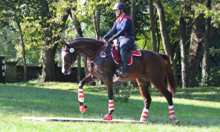 Survey Says OTTB Owners Satisfied With Their Mounts