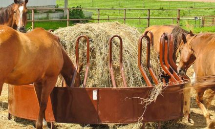 How to Safely Switch Your Horse's Hay