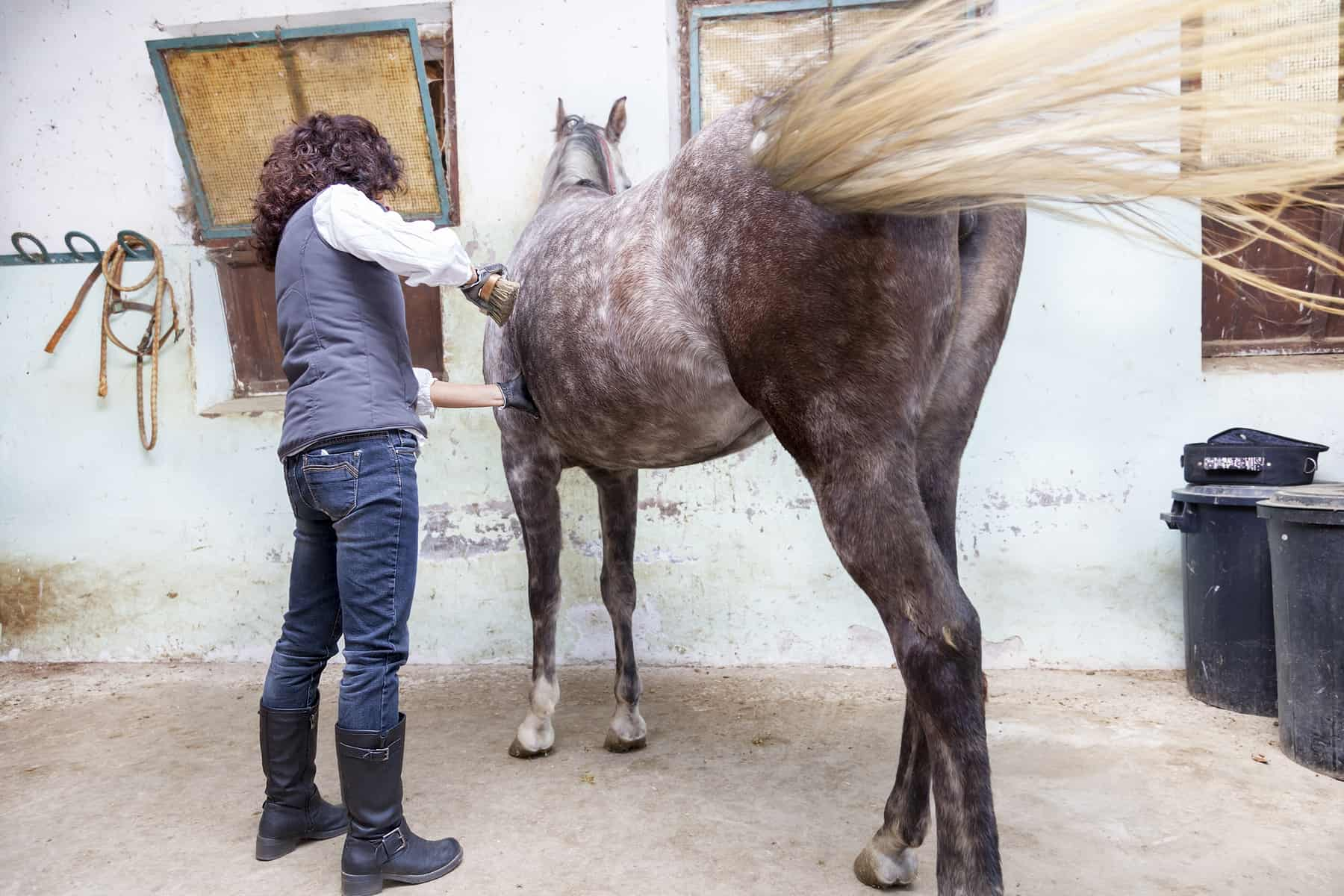 Equine Body Language: 7 Signs to Recognize
