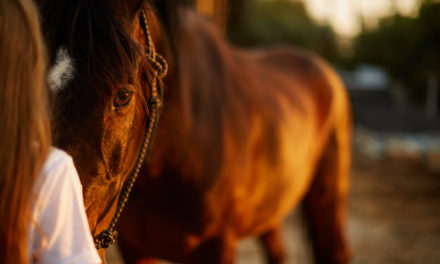 Human-to-Horse Bonds Make Tough Decisions Tougher