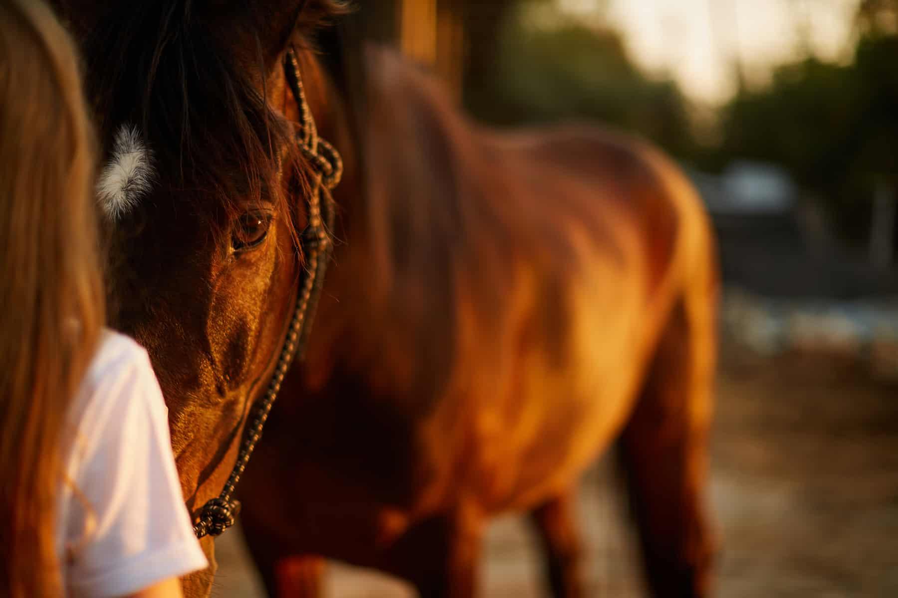 Post-Concussion Care for Equestrians