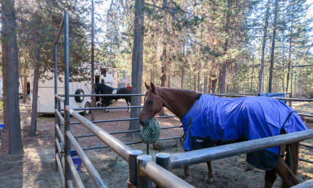 Horse Camping 101: Vacations at Horse Camps