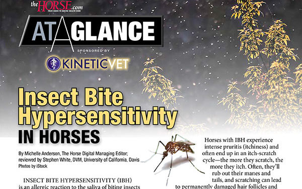 At a Glance: Insect Bite Hypersensitivity in Horses