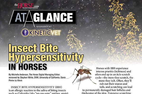 At a Glance: Insect Bite Hypersensitivity in Horses – The Horse