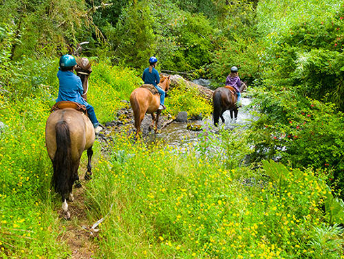 17 Tips for Recreational Trail Riders