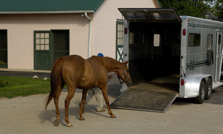 Lights Could Help Reduce Horse Stress During Loading, Trailering