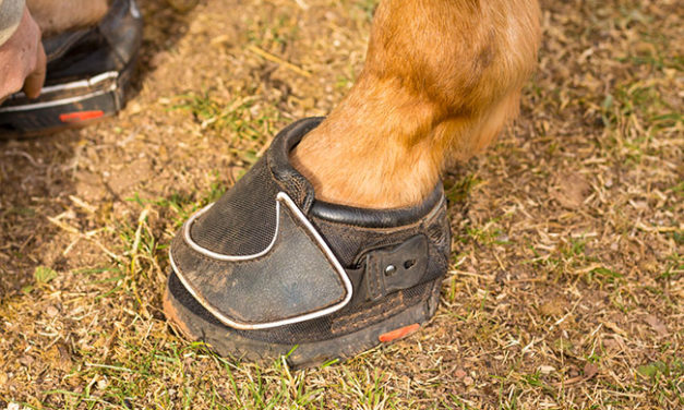 Trail Horse Hoof Care
