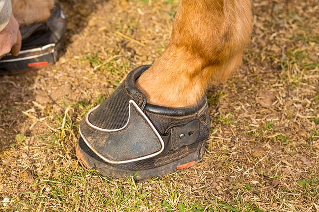 Trail Horse Hoof Care \u2013 The Horse