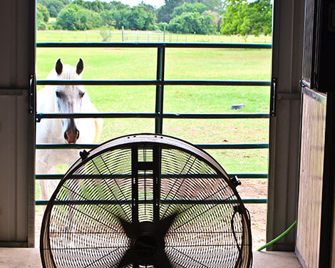 How to Help Your Horse Avoid Heat Stress This Summer