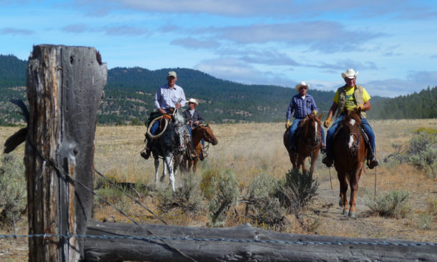 Horse Camping 101: Vacations With Accommodations