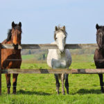 The Power of R&R for Horses