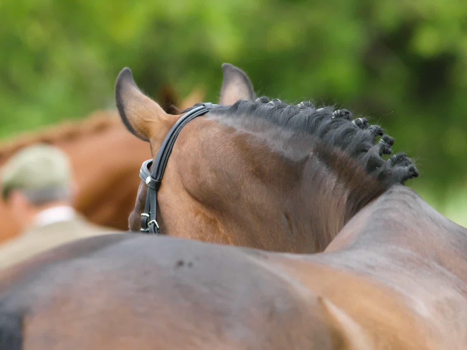 horse moving symmetrically
