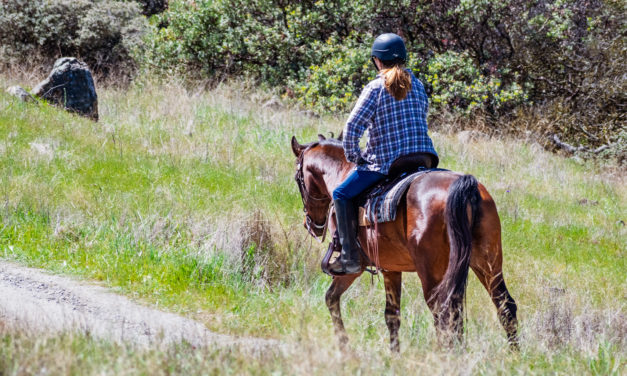 Tips for Greener Horse Trails