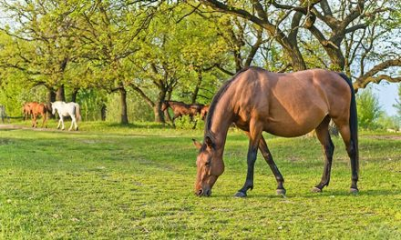 Changing Trends in Equine Reproduction